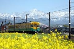 春うらら(「かぼちゃ電車」と菜の花畑)(2006/5/4)