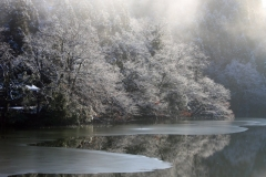 厳冬の静粛の中で/片地の池(2008/1/30)