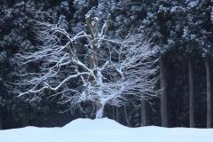 寒中の華/永代地内(2011/2/4)