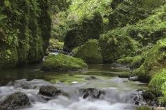大岩地区の自然